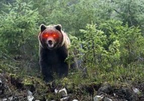 bear-bitcoin-laser-eyesDepositphotos_36840391_xl-2015-1920x1278.jpg