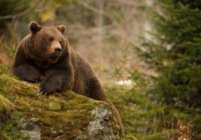 Bitcoin-Kurs: Bären können ersten Teilerfolg für sich verbuchen